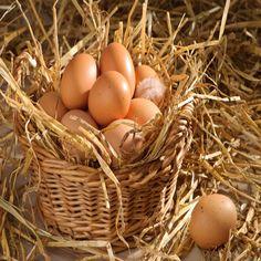 Jeść czy nie jeść – czyli spór o jajko cz.I
