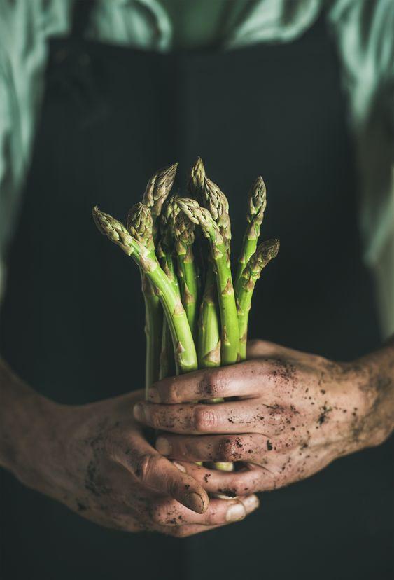 Sezon na szparagi – część I