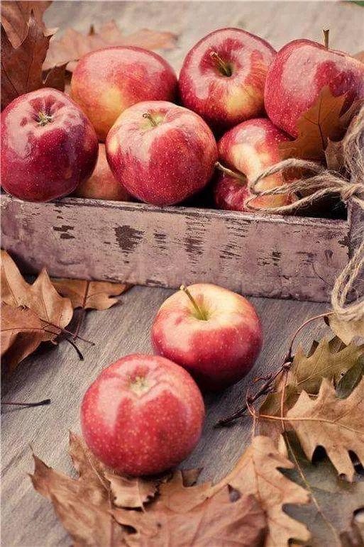 Jabłka – doceńmy, co dobre i nasze – część 1